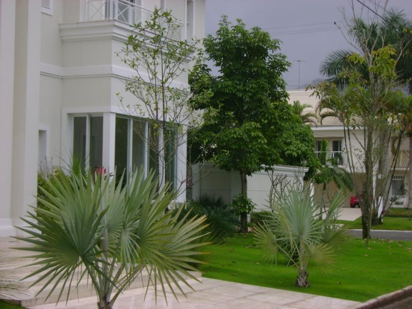 flores tropicais jardim : flores tropicais jardim:Para dar movimento ao jardim, foram utilizadas plantas tropicais, como